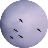 automne-grues-151016
